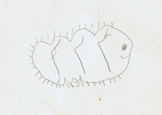 Taku_caterpillar